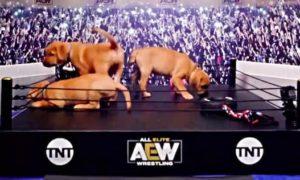 aew puppy battle royale