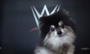 taya valkyrie nxt chien